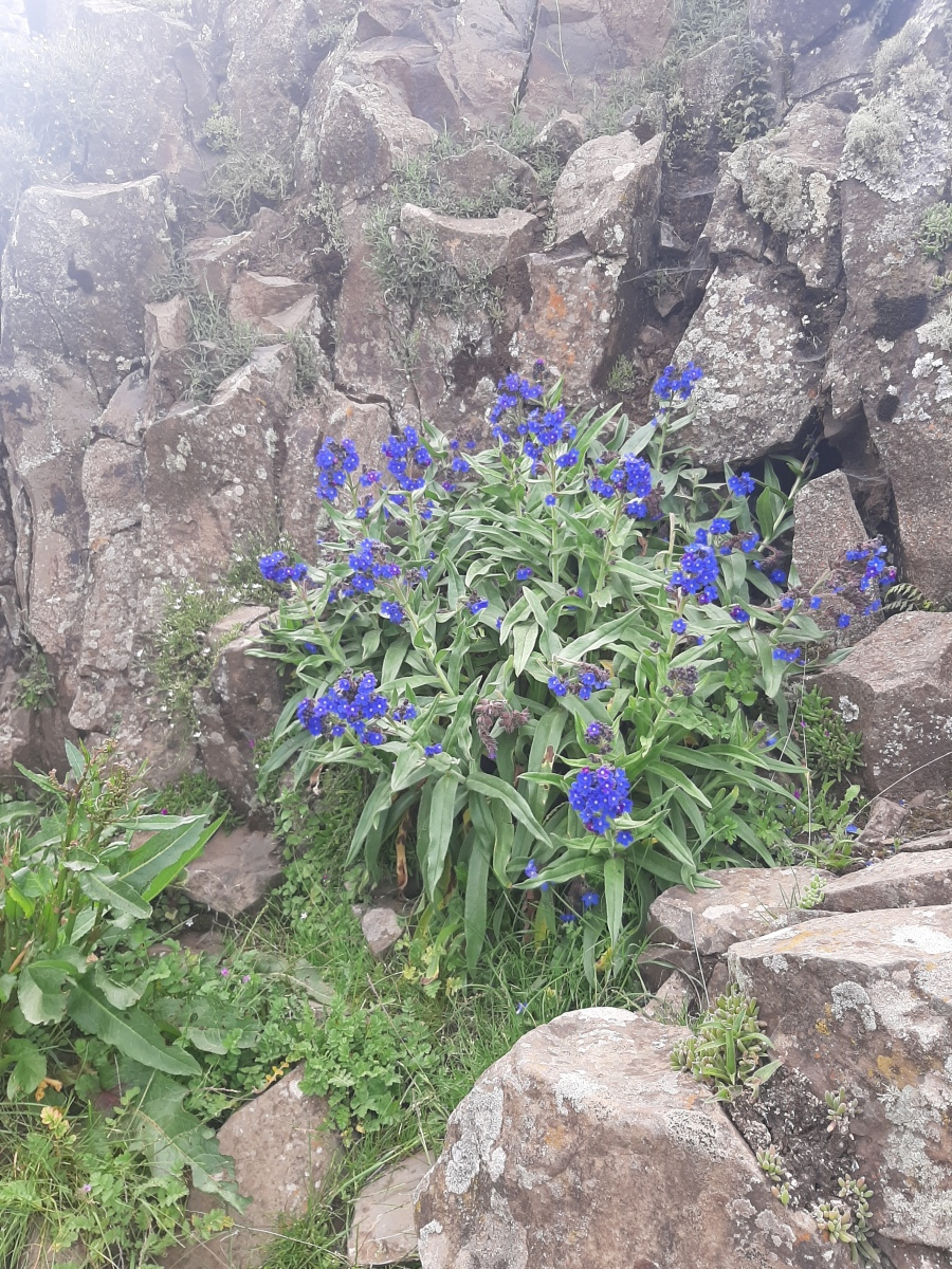 Anchusa by Access Eco Trekking Tours