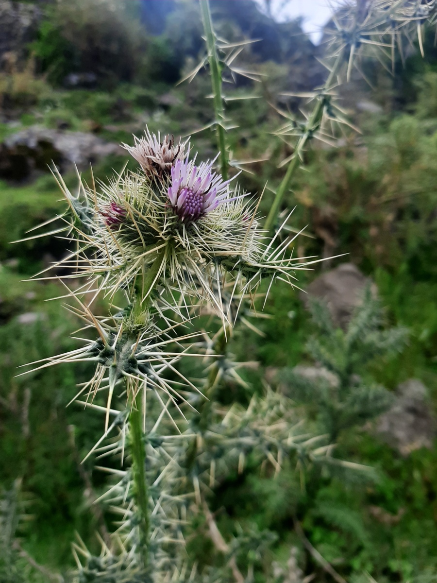Botanical tour in Ethiopia by Access Eco Trekking Tours